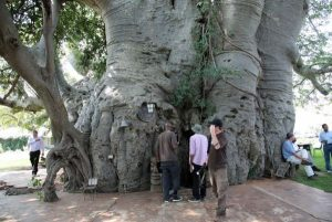 Big-Baobab-bar-South-African-Toursim2 refacuta