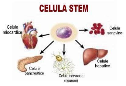 celule